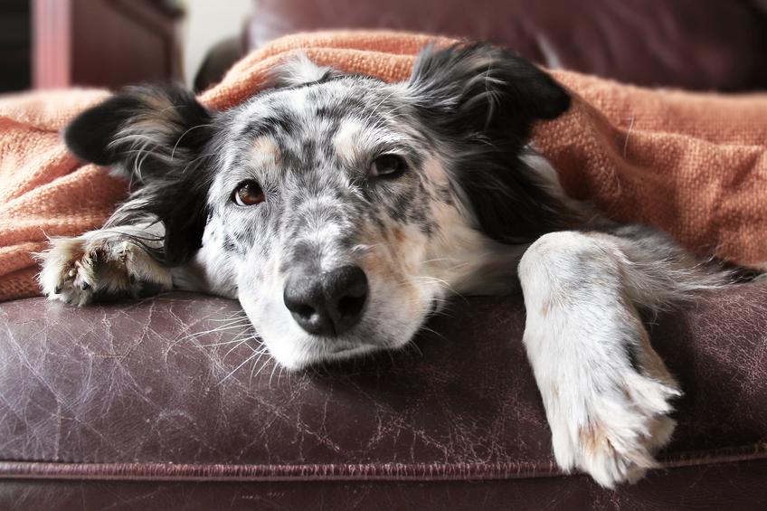 Kjøp  hundesikre  møbler  på  nettet